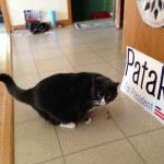 Pataki the cat. Photo Tina Paquette